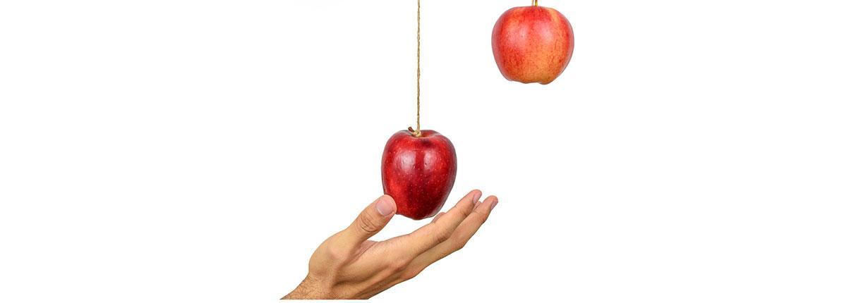 banner-laaghangend-fruit.jpg